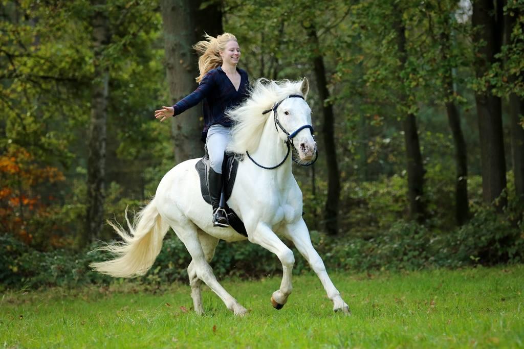 Szabadon barefoot felszereléssel vágtázó lovas