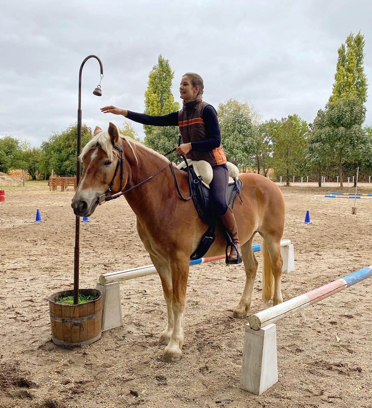 Eszterbauer Kata haflingi lován Barefoot Soft Walk nyereggel