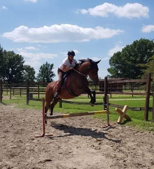 Barefoot nyereggel ugró ló és lovasa